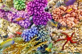 Underwater world with corals and tropical fish. — Foto de Stock