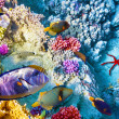 Underwater world with corals and tropical fish. — Stok fotoğraf #73848097