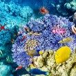 Underwater world with corals and tropical fish. — Stok fotoğraf #73848135