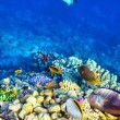 Underwater world with corals and tropical fish. — Stok fotoğraf #73848195