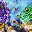 Underwater world with corals and tropical fish. — Stok fotoğraf #73848201