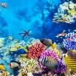 Underwater world with corals and tropical fish. — Stok fotoğraf #73848203