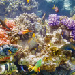 Underwater world with corals and tropical fish. — Stok fotoğraf #73848277