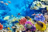 Underwater world with corals and tropical fish. — Stock Photo