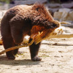 Cute Brown bear. — Stock Photo #76620169