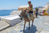 Donkey Transport in Oia, Santorini, Greece — Stock Photo