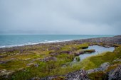 The shore of the Barents Sea — Stock Photo