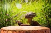 Background forest mushroom tree stumps — Stock Photo
