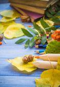 Autumn back school acorns and school — Stock Photo