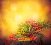 Autumn fruit basket red rowan sun — Stock Photo
