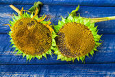Two yellow sunflowers painted fence — Stock Photo