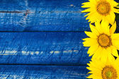 Yellow sunflowers painted fence — Stock Photo