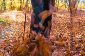 Nordic walking sport run walk motion blur outdoor person legs fo — Stock Photo