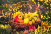 Autumn orchard basket fresh fruit sunlight — Foto Stock
