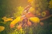 Basket full fruits grass sunset light — Stockfoto