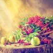 Autumn fruit basket red rowan sun Still Life — Stock Photo #53962823