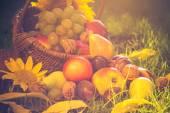 Günbatımı ışığı tam meyve sepeti çimen — Stok fotoğraf