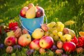 Sad autumn summer fruits grass sunshine — Stock Photo