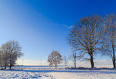 Winter landscape trees snow covered fields windmills — Stock Photo