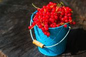 Red currant fruit bucket summer rain drops water wooden — Stock Photo