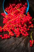 Red currant fruit bucket summer pouring wooden table — Stock Photo