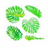 Watercolor monstera leaves — Stock Vector