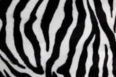 Zebra print for background  — Stockfoto