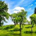 Green nature landscape — Stock Photo #75085897