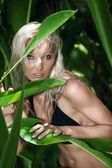 In jungle — Stock Photo