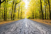 The destroyed road in forest — Stock Photo