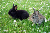 Two rabbits in the meadow — Stock Photo