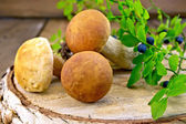 Ceps with blueberries on birch billet — Stock Photo