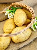 Potatoes yellow with flower in basket on sacking — Stok fotoğraf
