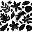 Leaves silhouettes collection 1 — Stock Vector #55141973