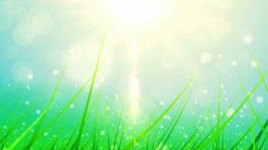 Spring green grass — Stock Video