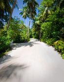Palmbomen op tropisch strand — Stockfoto
