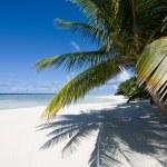 Palm trees on a tropical beach — Stock Photo #59096229