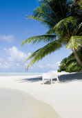Beach chair under a palm tree on a hot afternoon — Stock Photo
