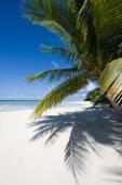Palmeras en una playa tropical — Foto de Stock