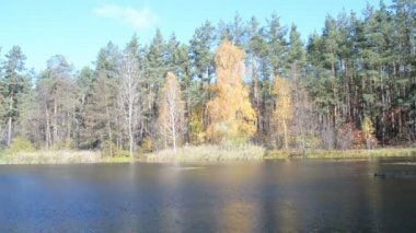 Autumn daylight landscape reflected in water, wind diversity, — Stock Video