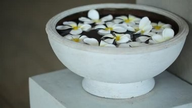 Fragrant plumeria flowers — Stock Video