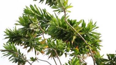 Zielone gałęzie — Wideo stockowe