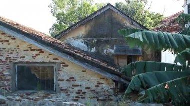 Stary dom i Dłoń drzewo — Wideo stockowe