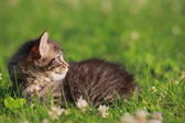 Cute kitten in grass — Stock Photo