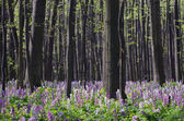 Flowers in the Forest — Stock Photo