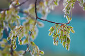 Spring abstraction — Stock Photo