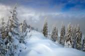 Floresta de inverno — Fotografia Stock
