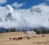 Pasture in the mountain village  — Stock Photo