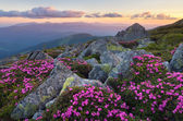 Flowers in the mountains — Stock Photo