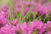 Tau auf dem Gras — Stockfoto
